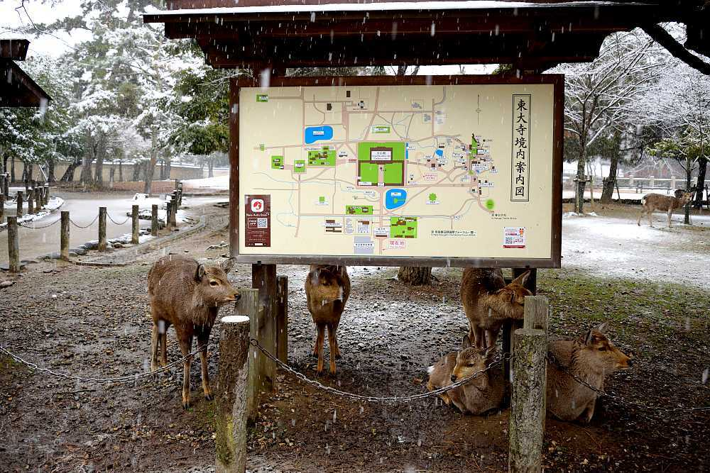 Plan parc Nara