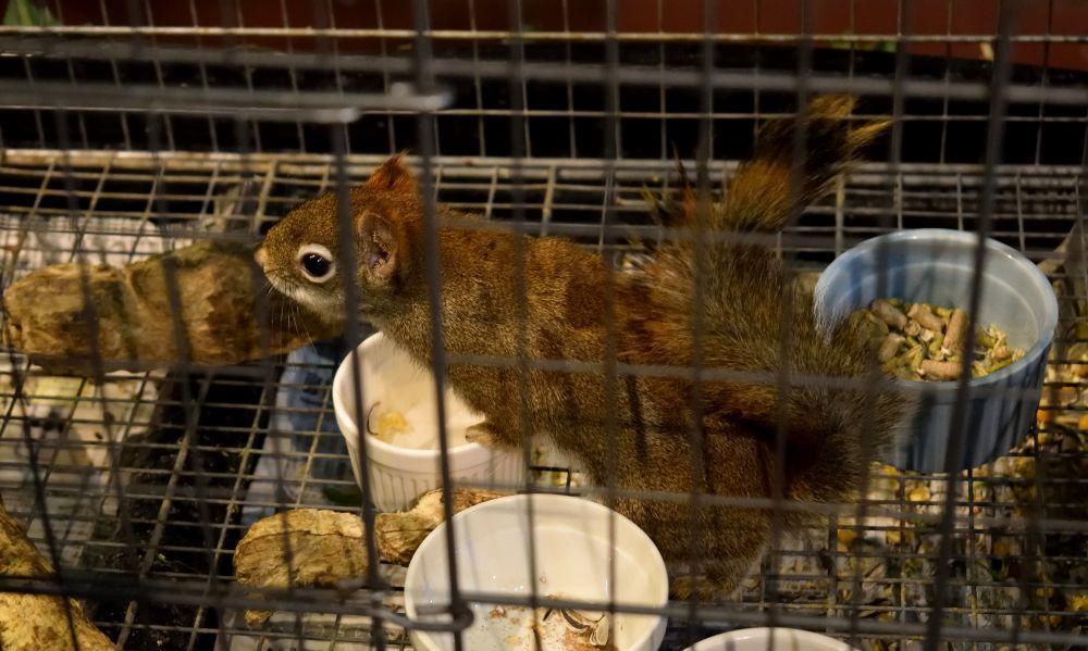 ecureuil en cage