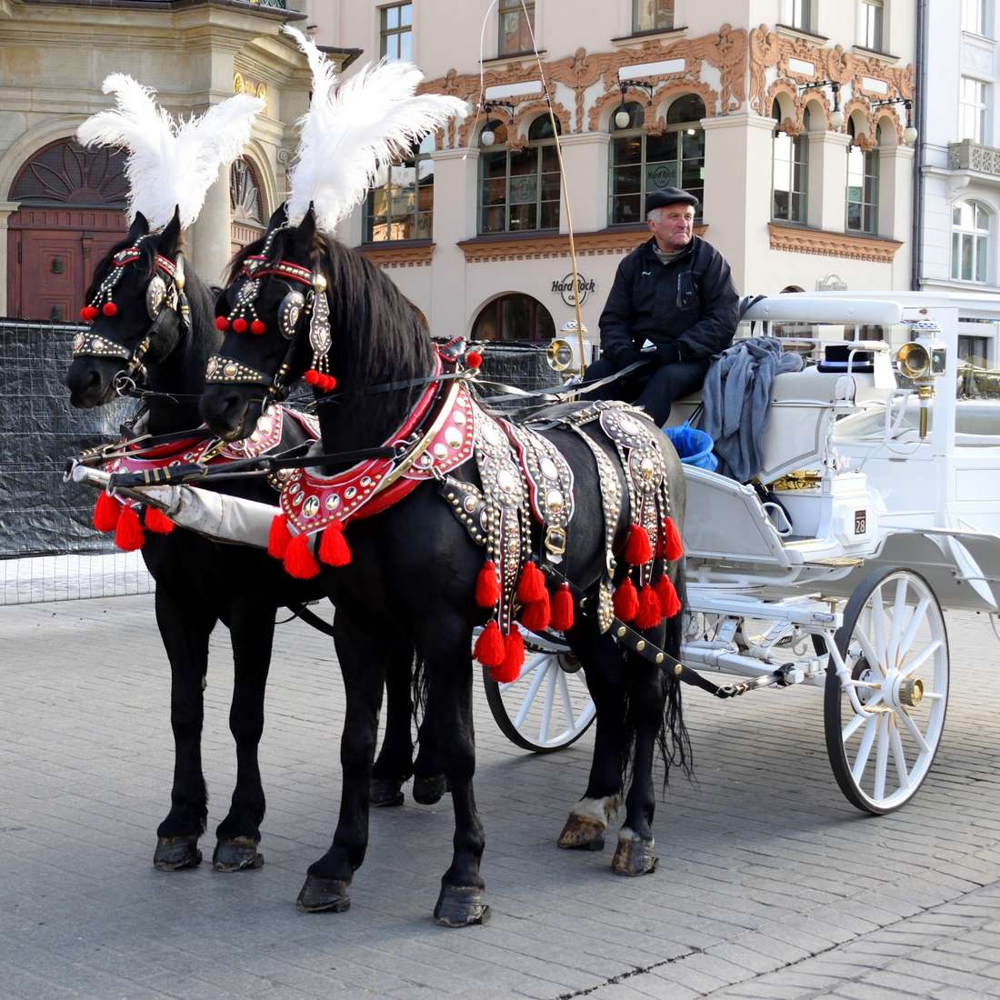 chevaux-cracovie