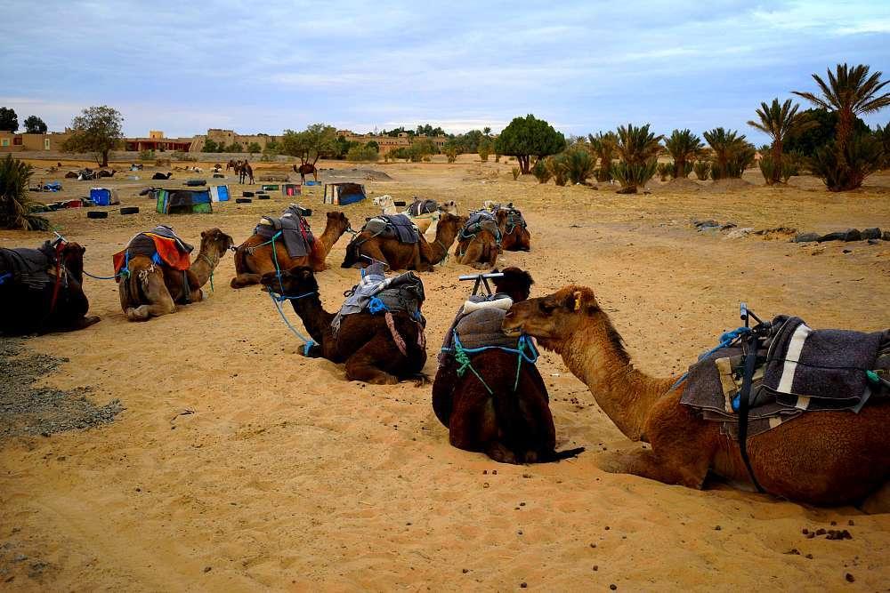 Caravane dromadaire désert