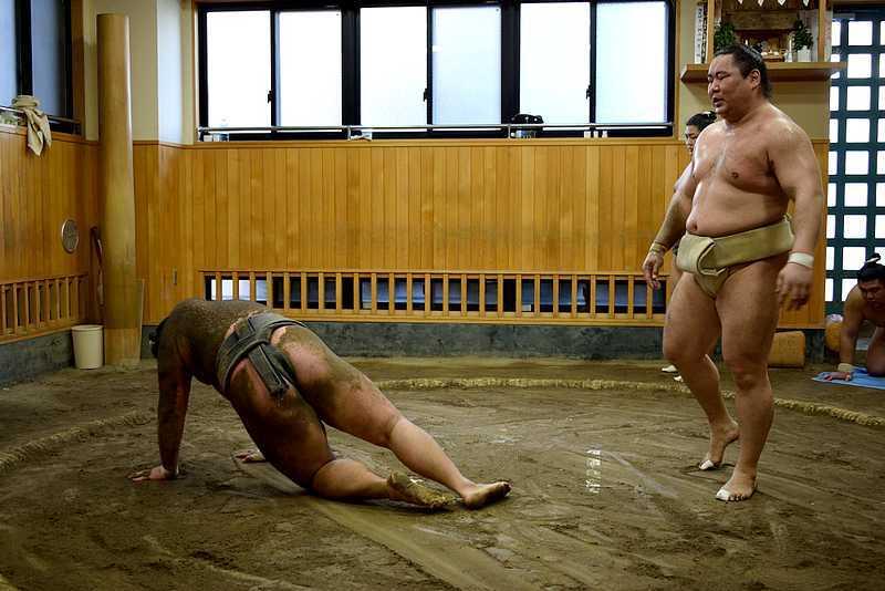 Entrainement sumo au Japon