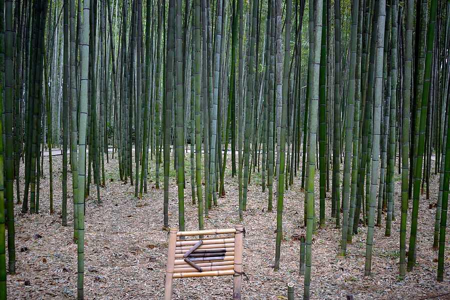 Entrée bambouseraie Arashiyama