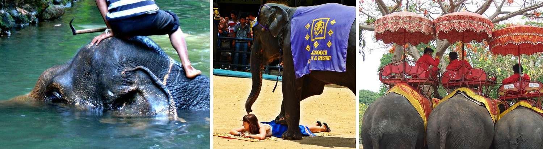 Maltraitance des éléphants en Thaïlande