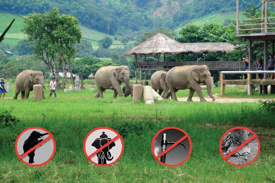 Refuge pour éléphants en Thaïlande