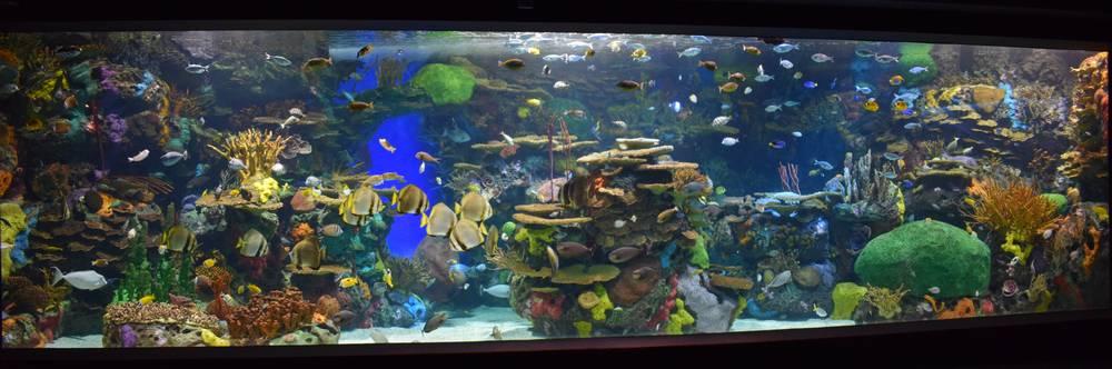 Aquarium récif eau de mer