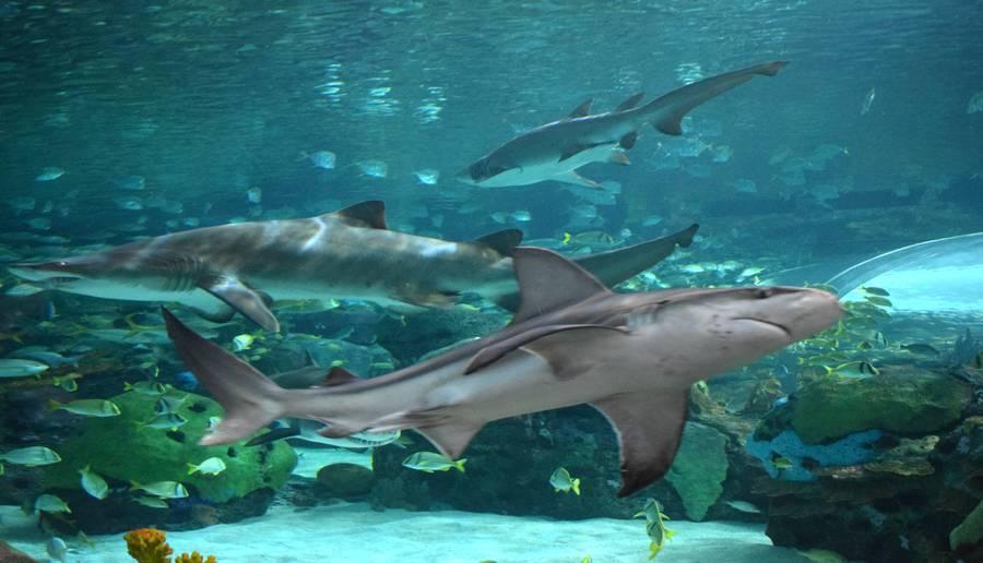 Aquarium Ripley Toronto