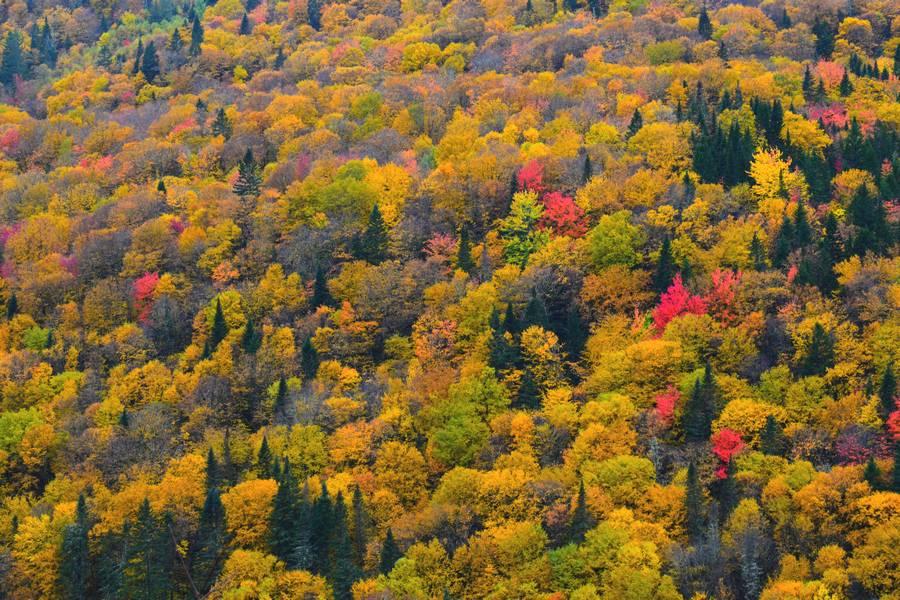 arbres colorés automne