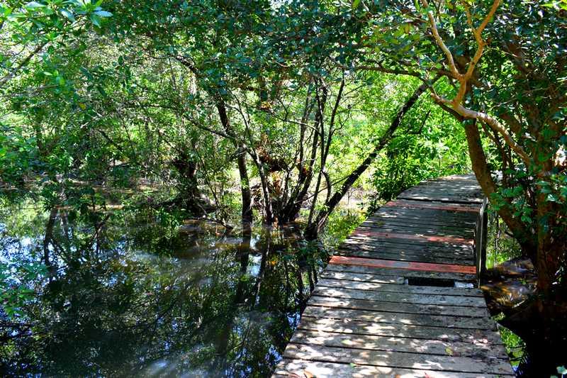 foret mangrove koh chang