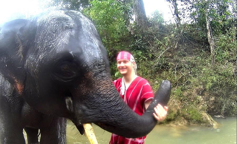 laver elephant