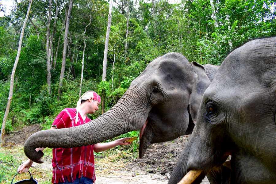 nourrir elephants chiang mai