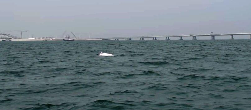 dauphin blanc chine
