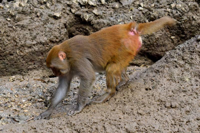 singes baie along