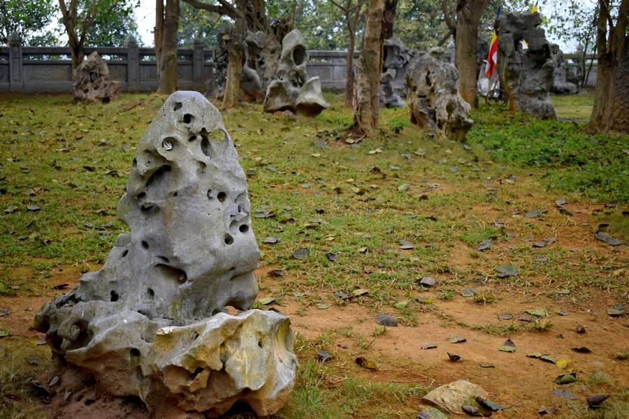 termites pierre
