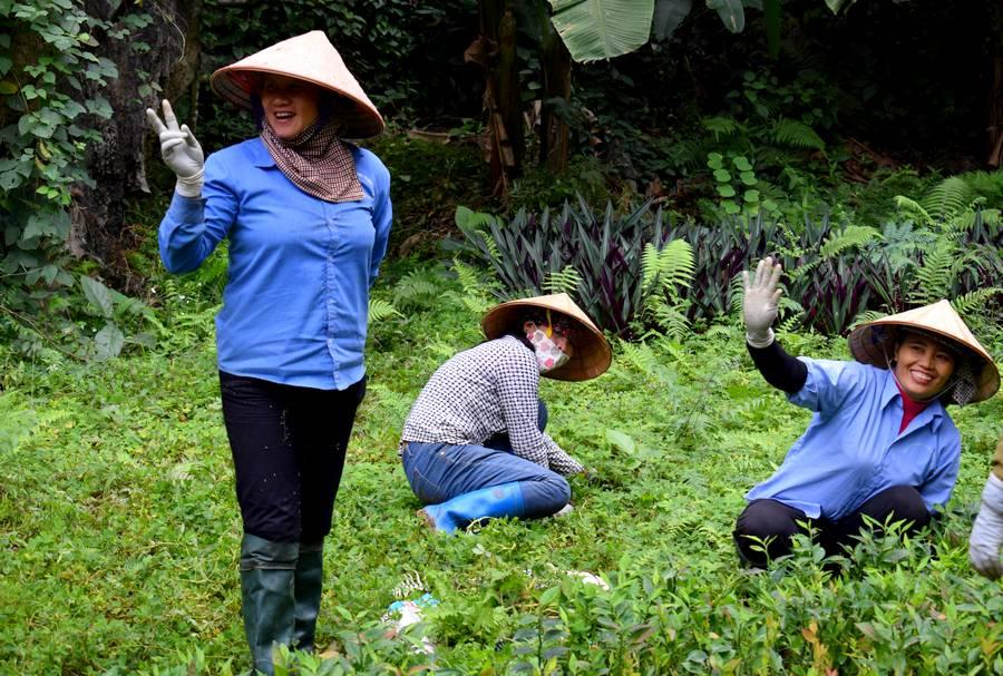 Plantation vietnam