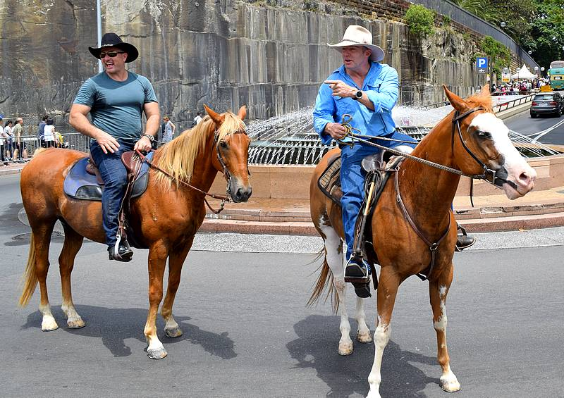 cow boy australie