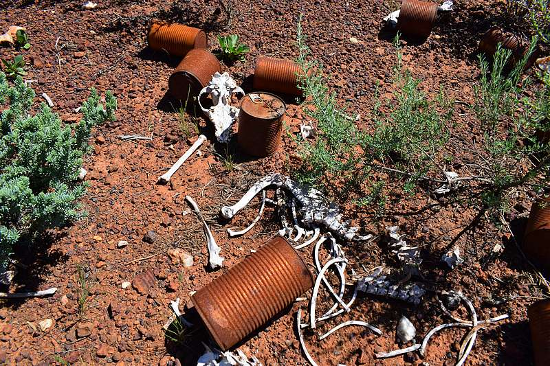 cadavre kangourou