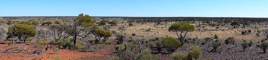 panorama bush