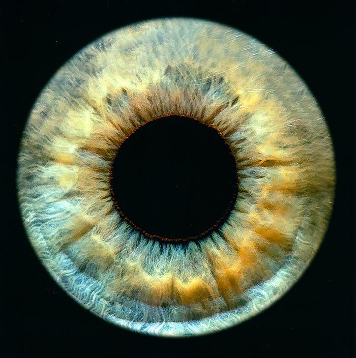 photo d'un oeil