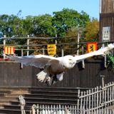 chouette zoo amnéville