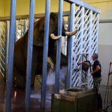 coulisses enclos éléphant