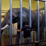enclos éléphant zoo