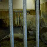 enclos rhinocéros zoo amnéville