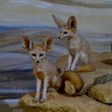 fennecs zoo amnéville