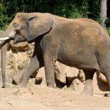 elephant zoo amneville
