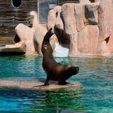 lion de mer zoo amnéville