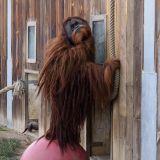orang-outan zoo amnéville