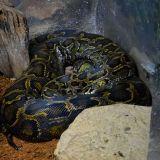 python zoo amnéville