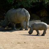 rhinoceros zoo amnéville