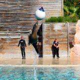 saut otarie zoo