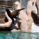 spectacle lion de mer amnéville