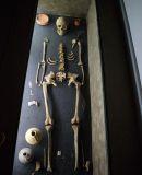 squelette musée archéologique arlon