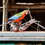vélo perroquet