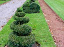 arbres-tailles