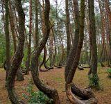arbres tordus