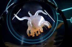 animal-profondeur-ocean