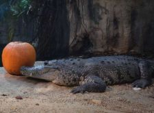 crocodile-zoo-schonbrunn