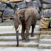 Eléphant à Vienne