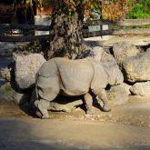 Rhinocéros zoo Vienne